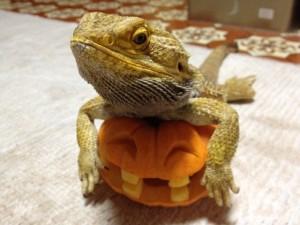 かぼちゃが仲間になった