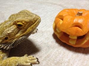 トカゲとかぼちゃ